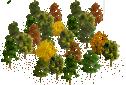 data/rules/classic/resources/images/forest/broadleaf/broadleaf0011.png