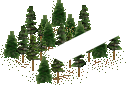data/rules/classic/resources/images/forest/conifer/conifer1000.png