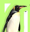 src/image_data/penguin.png