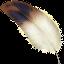 cqrlog avatar